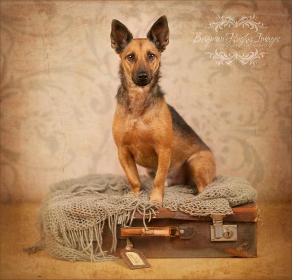 hundporträtt - Bergman Hughes Images